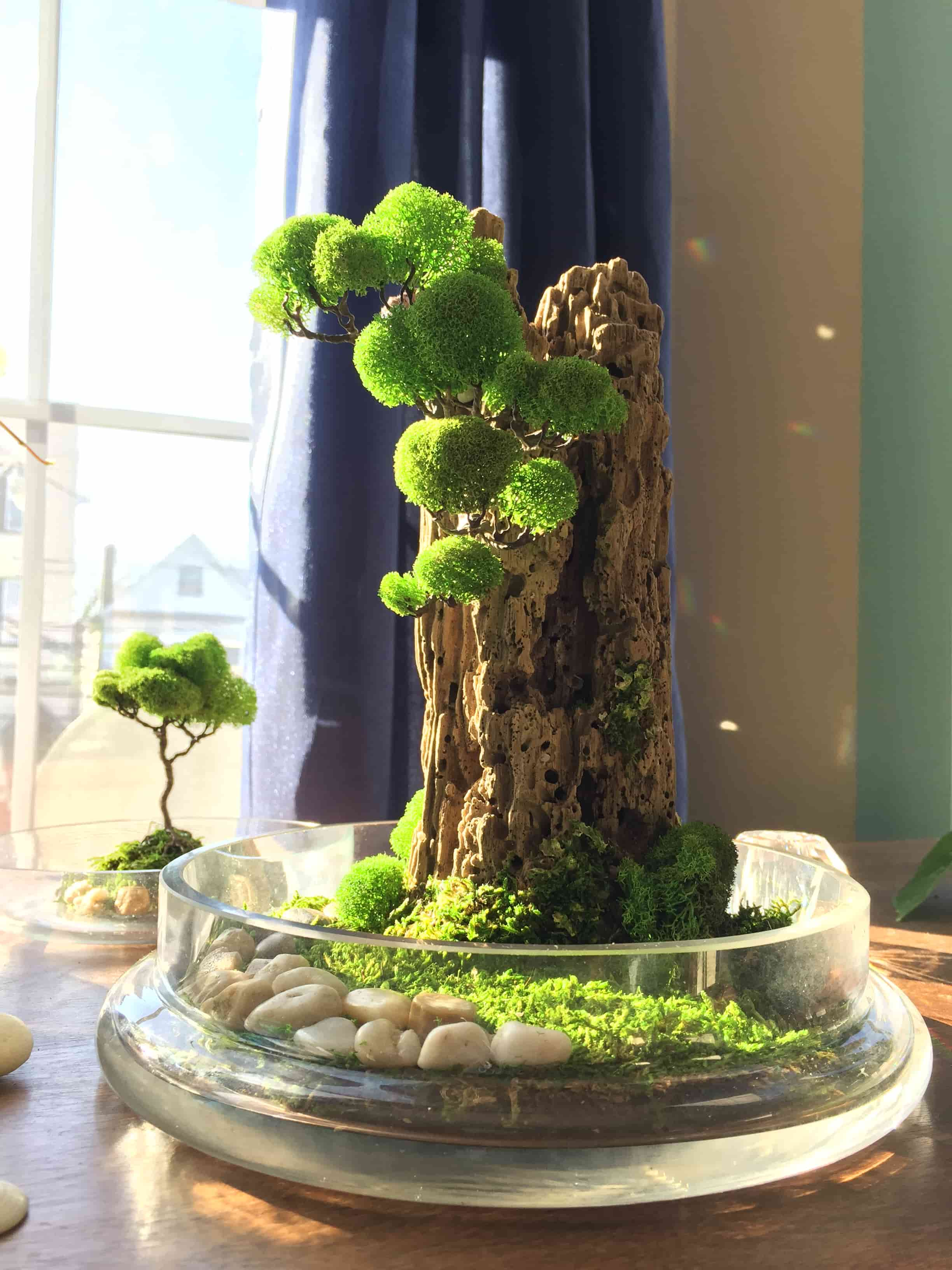 bonsai tree for office. Glass Dome Terrarium - Eco Plant Decoration For Office And Home Bonsai Tree S